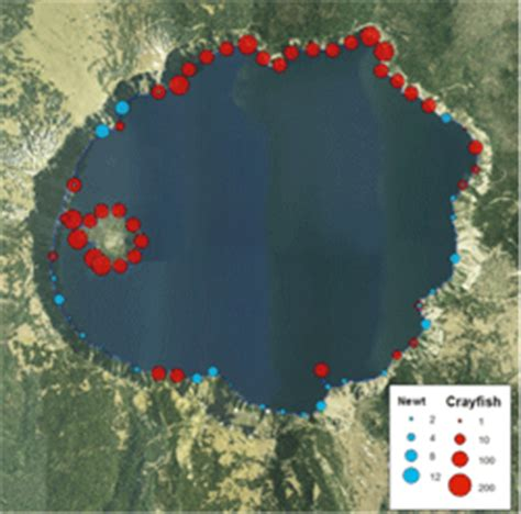 Where are Crayfish found in Crater Lake? - Crater Lake
