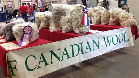 All Canada Sheep Classic   Canadian Co-operative Wool