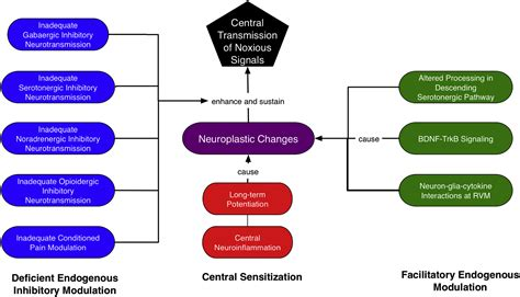 The Transition of Acute Postoperative Pain to Chronic Pain
