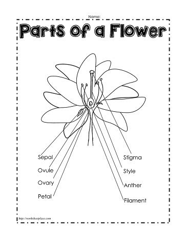Awesome Picture Of A Flower With Parts Labeled - flowers